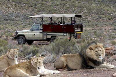Destiny Africa Tours